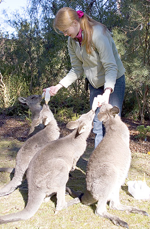 Orphaned Roos